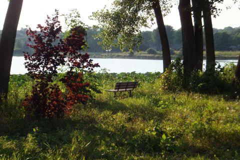 Bench Overlooking Pond